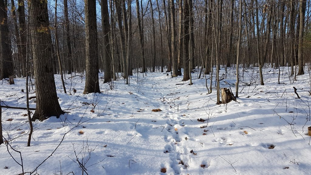 marche coronavirus forêt bois